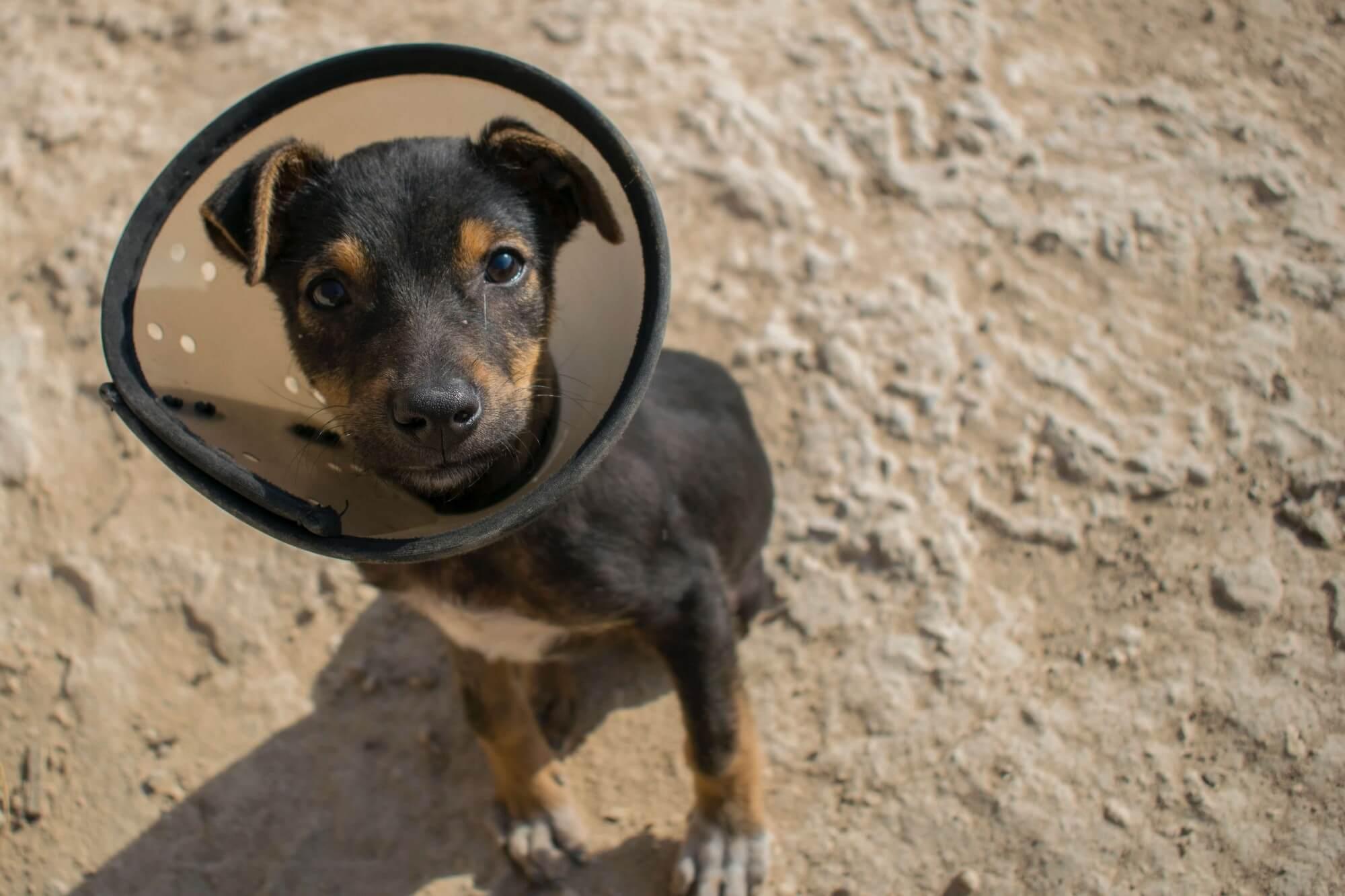 seguro veterinario para mascotas