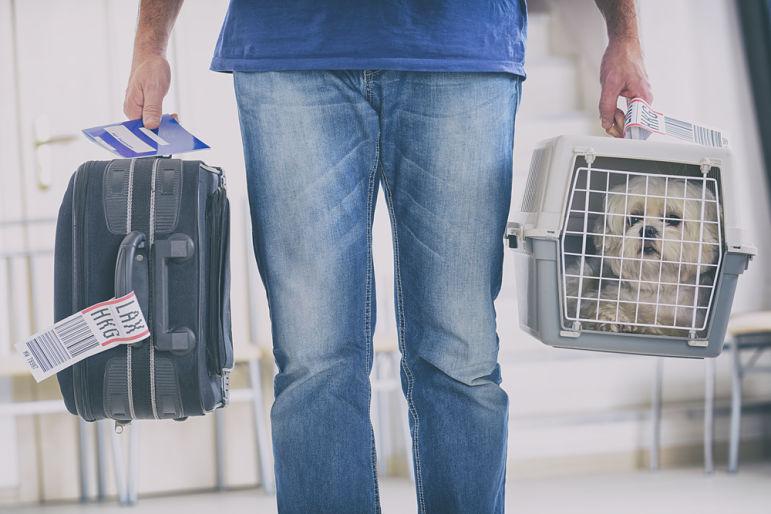 ¿Cómo ir en avión con perro?
