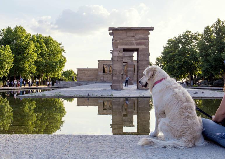 Normativa Madrid Seguro para Perros