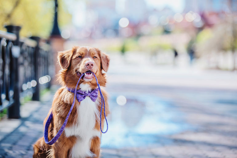 normativa seguro para perros madrid