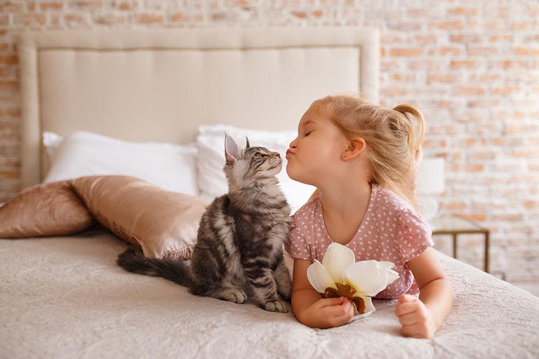 ¿Qué es un seguro para gatos?