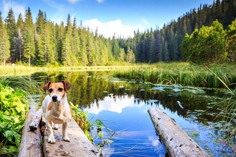 5 rutas con perros en Valencia que no te puedes perder