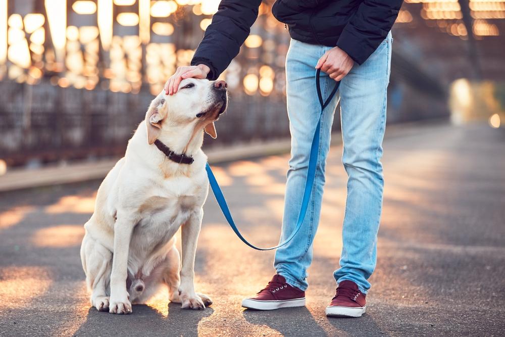 Normativa Madrid de seguros para perros