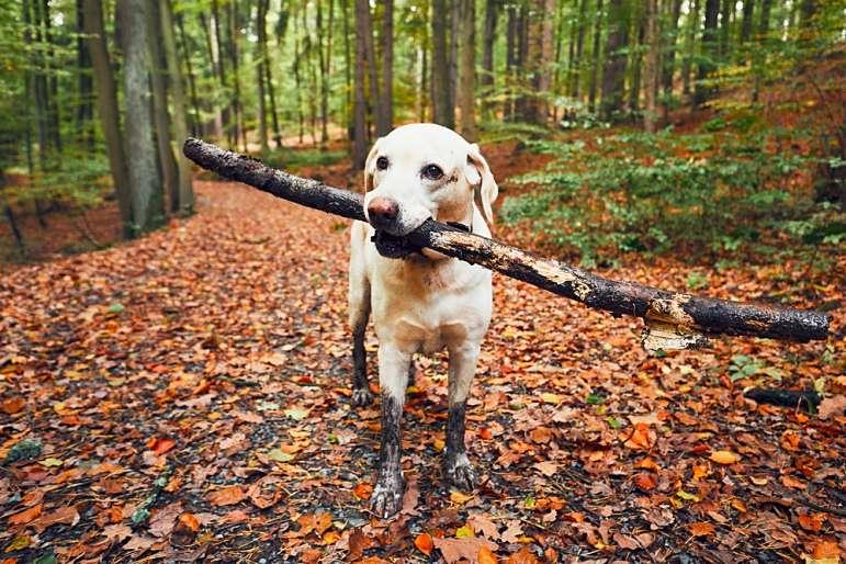 5 rutas de senderismo por Cataluña con perros