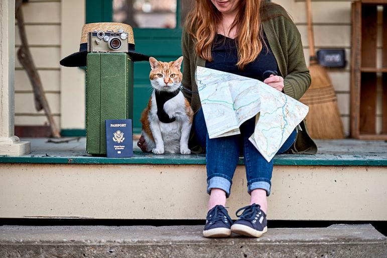 ¿Cómo llevar un gato de viaje en coche?