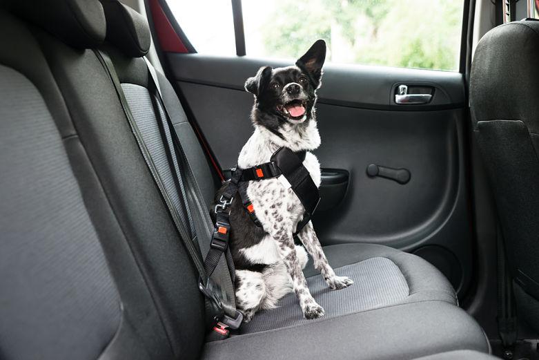viajar con perro en el coche