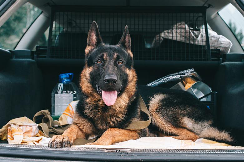 Normativa para viajar en coche con tu perro
