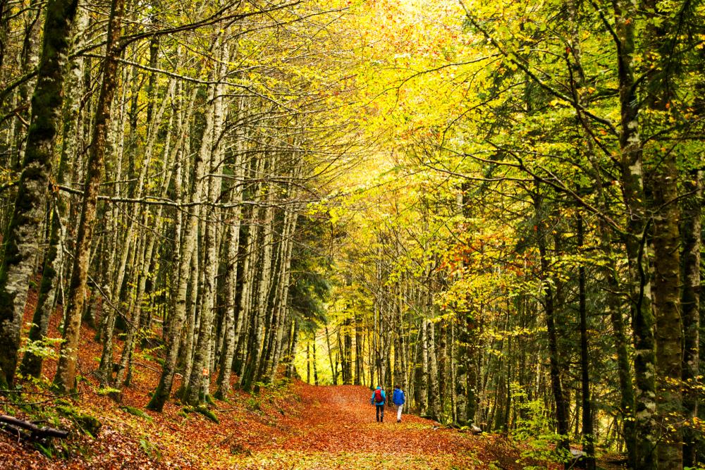 Rutas con perros por Navarra. ¡Disfruta de la naturaleza!